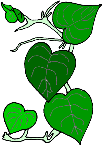 350x496 Ivy Clipart Rainforest Vine 4