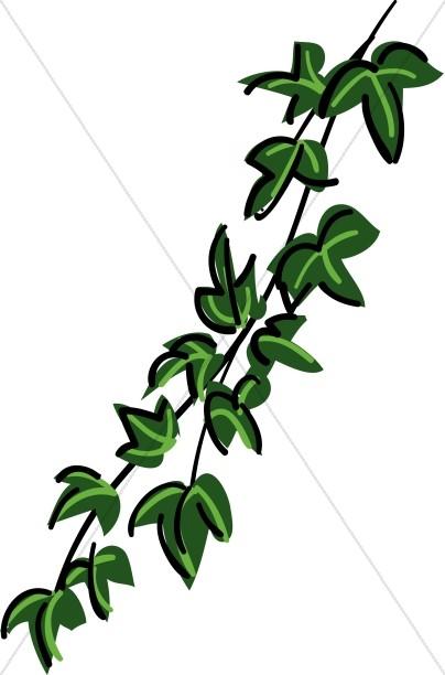 404x612 Contemporary Ivy Vine Nature Clipart
