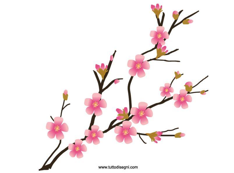 804x595 Cherry Blossom Clipart Free