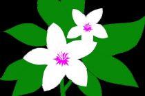 210x140 Jasmine Flower Clipart Jasmine Flower Clip Art Clipart Panda Free
