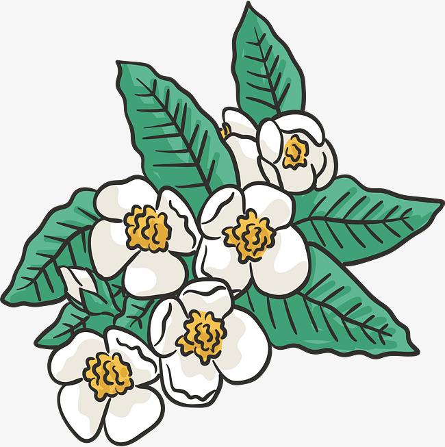 650x653 Jasmine Flowers, Vector Png, Hand Drawn Wind, Jasmine Png