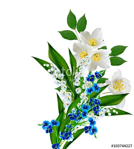 448x500 Jasmine White Flower Isolated On White Background Stock Photo