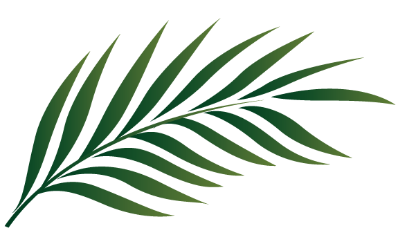 575x356 Clipart Palm Tree Leaves Leaf Clipground