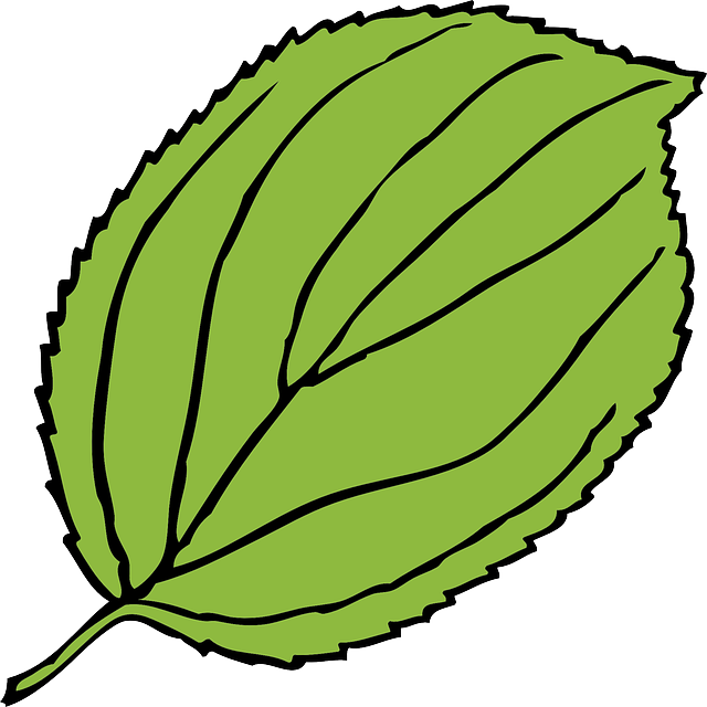 640x640 First Class Jungle Leaves Clipart Leaf