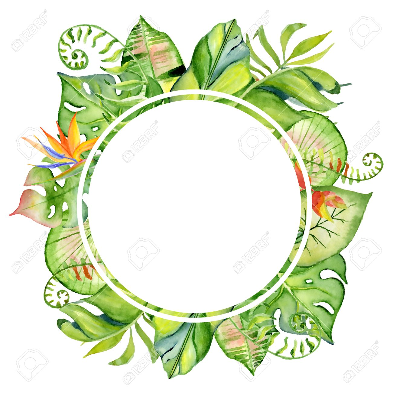 Jungle Plants Clipart