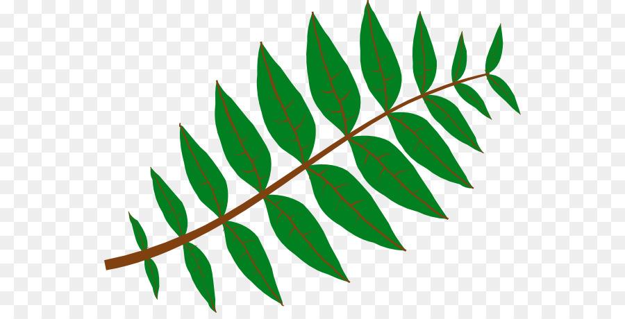 900x460 Leaf Plant Jungle Pinnation Clip Art