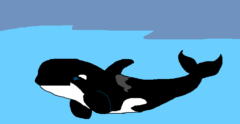 765x397 Type D Killer Whale By Cargirl9