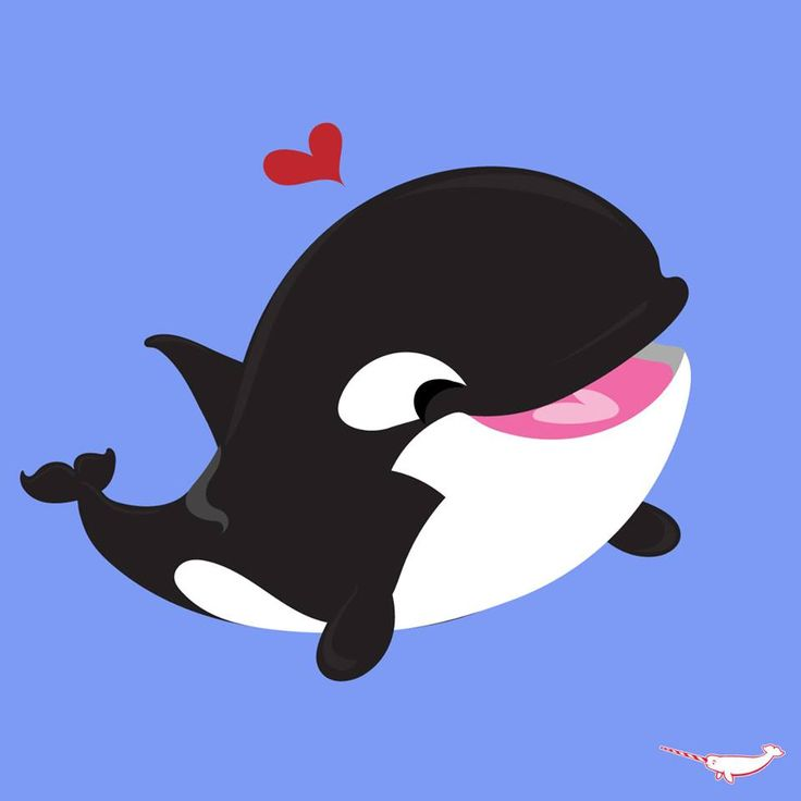 736x736 Cartoon Orca Whale 137 Best Whales Images On Canitz Art