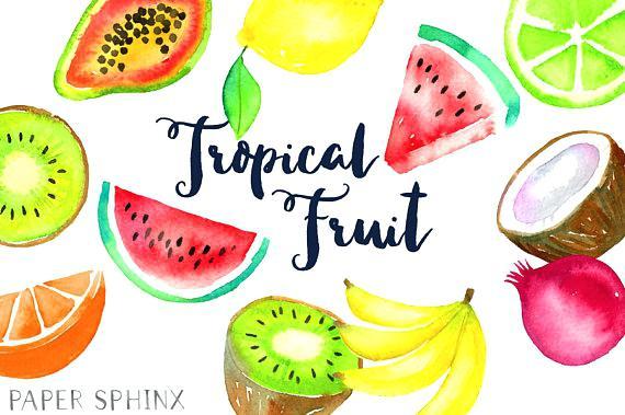 570x379 Fruit Clipart Watercolor Tropical Fruit Fruit Clip Art Pineapple