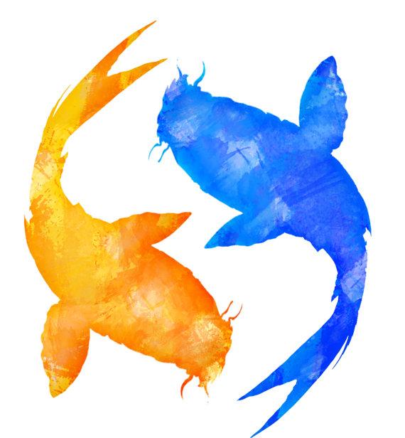 570x616 Commercial Usestant Download Orange Blue Koi Fish Clipart