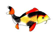 213x137 Colorful Koi Fish Drawings