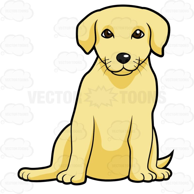 800x800 Golden Labrador Puppy Sitting Cartoon Clipart Vector Toons