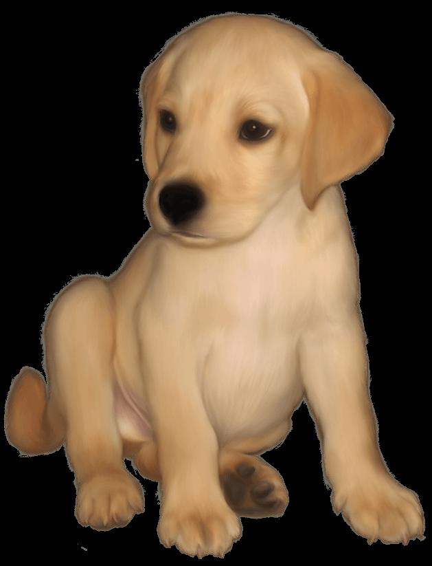 629x823 Labrador Cliparts