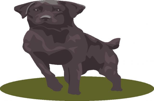 640x420 Black Labrador Retriever Clipart