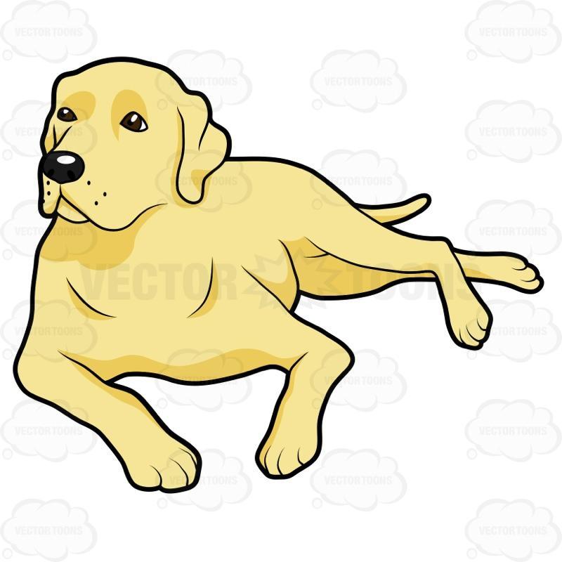 800x800 Yellow Lab Clip Art
