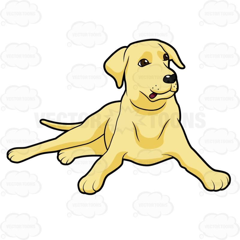 800x800 Yellow Lab Dog Clipart. Labrador Cliparts
