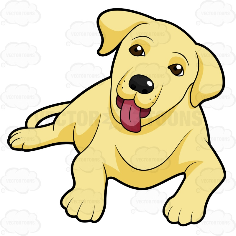 800x800 Cute Yellow Labrador Puppy Lying Down With Its Tongue Sticking Out