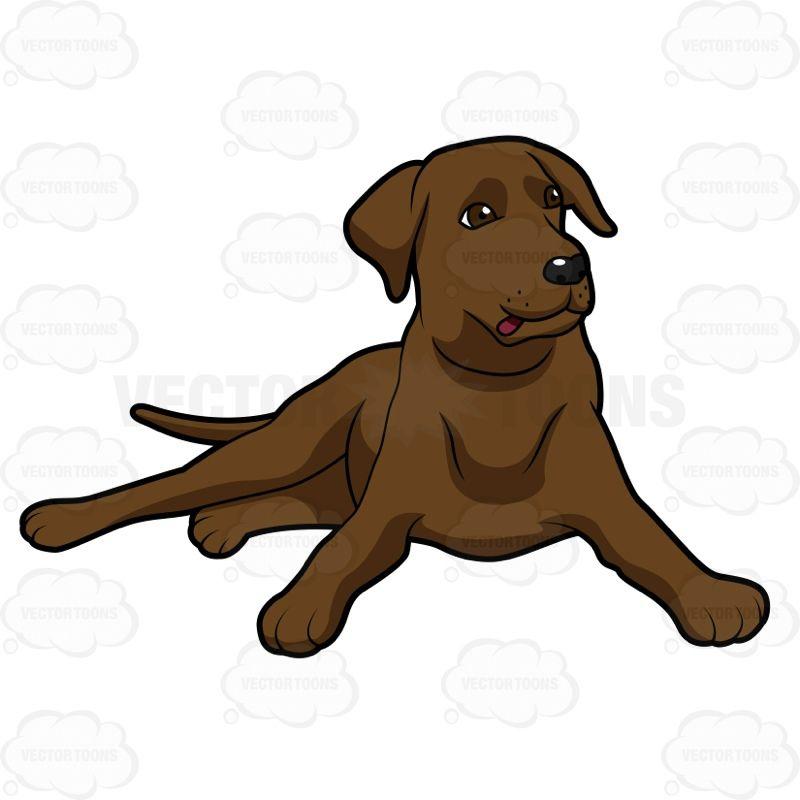 800x800 Labrador Cliparts Free Download Clip Art