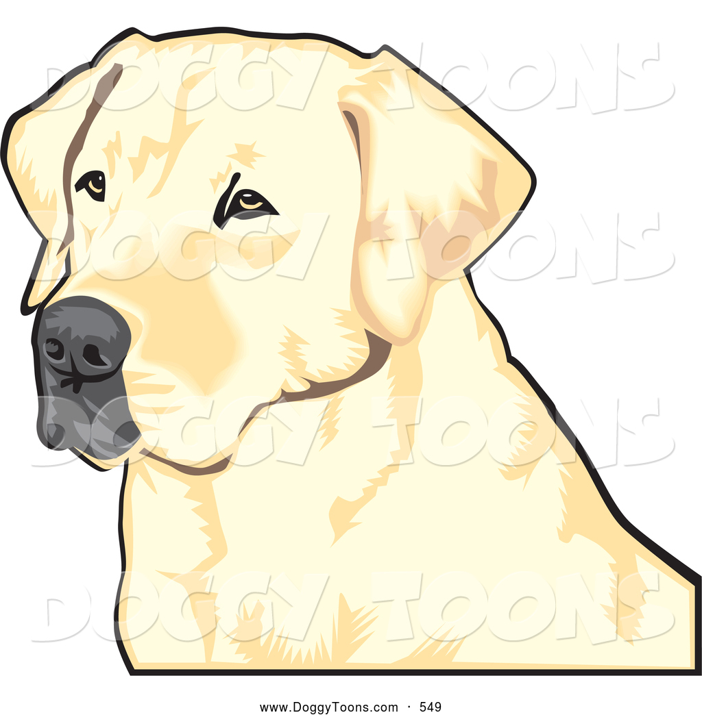 1024x1044 Royalty Free Labrador Stock Doggy Designs