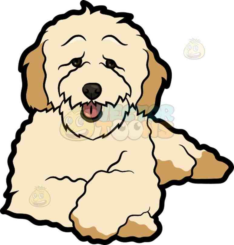773x809 Cream Colored Poodle Cartoon Clipart Clip Art Library Cartoon Mini