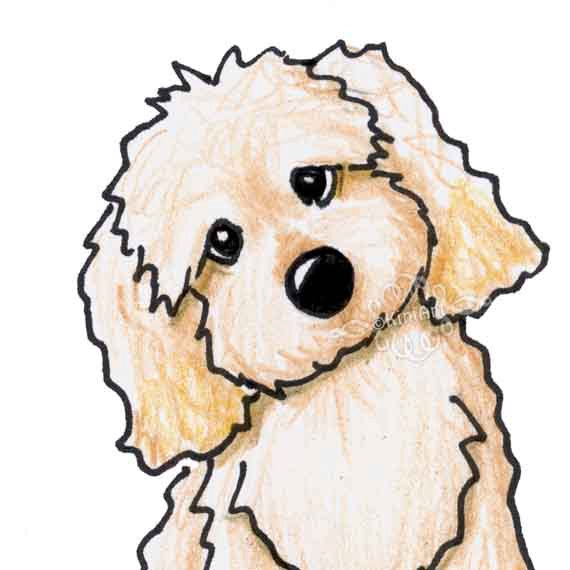 570x570 Labradoodle Dog Cliparts Free Download Clip Art
