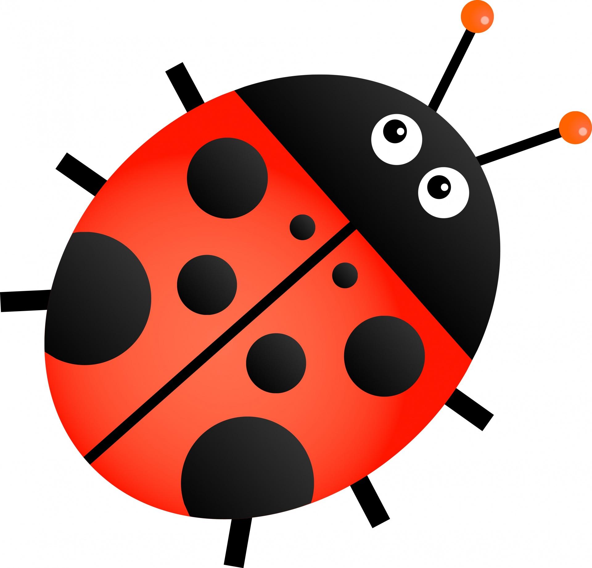 1920x1842 Ladybug Free Stock Photo