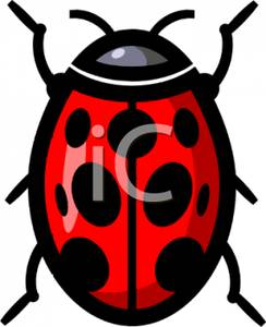 244x300 Overhead View Of A Ladybug Clipart Picture