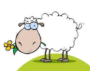 300x237 76 Best Barik (Dreamland Lamb) Images