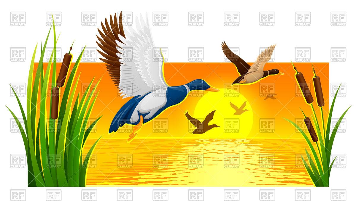 1200x679 Wild Ducks Soaring And Sunset