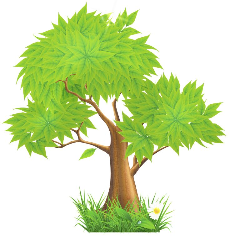 736x753 73 Best Tree Images On Clip Art, Illustrations