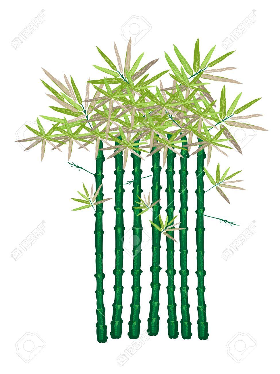 975x1300 Bamboo Garden Clipart