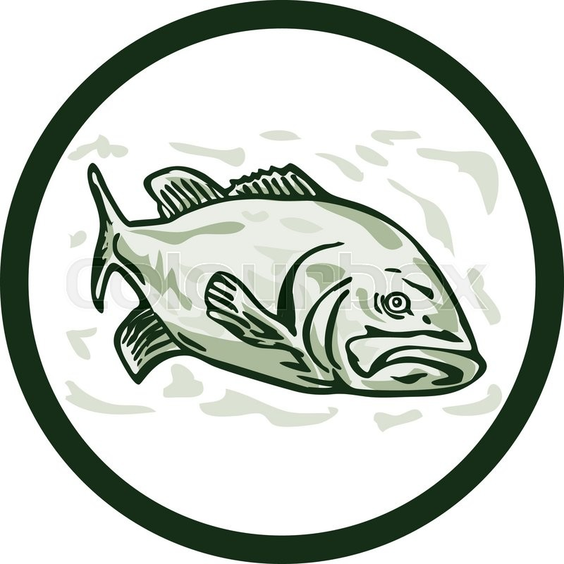 800x800 Illustration Of A Largemouth Bass Fish Facing Front Side Set