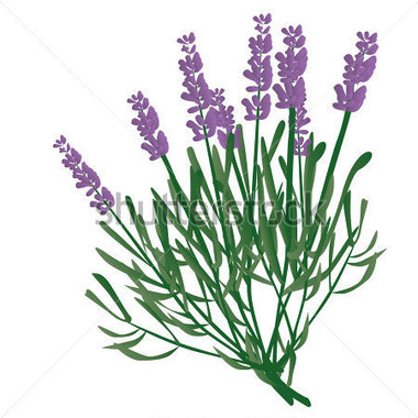 380x380 Collection Of Lavender Plant Clipart High Quality, Free