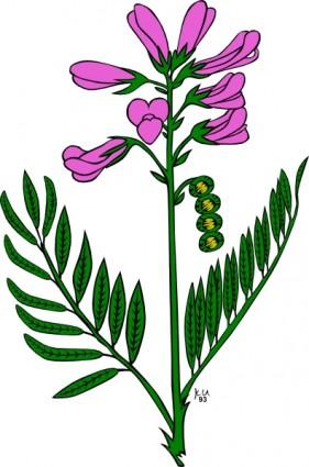 281x425 Lavender Flower Clip Art Free Clipart Panda