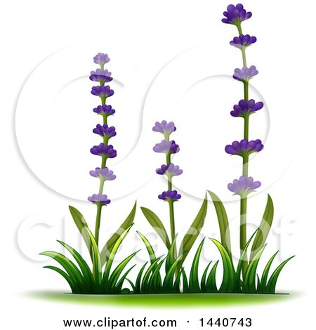 450x470 Royalty Free (Rf) Lavender Clipart, Illustrations, Vector Graphics