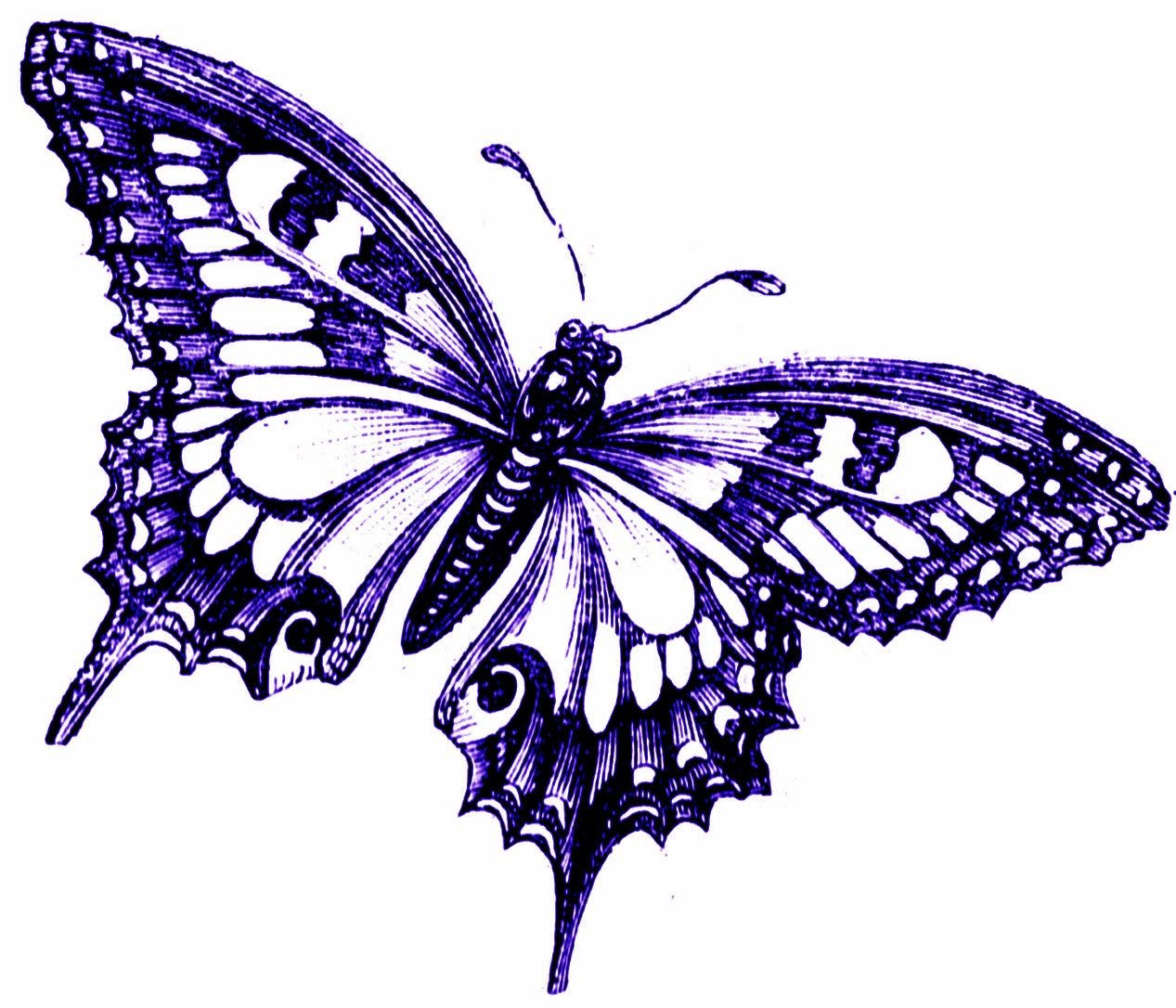 1267x1086 Butterfly Clipart Lavender