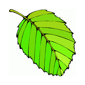 Leaf Clipart At Getdrawings Com Free For Personal Use Leaf Clipart