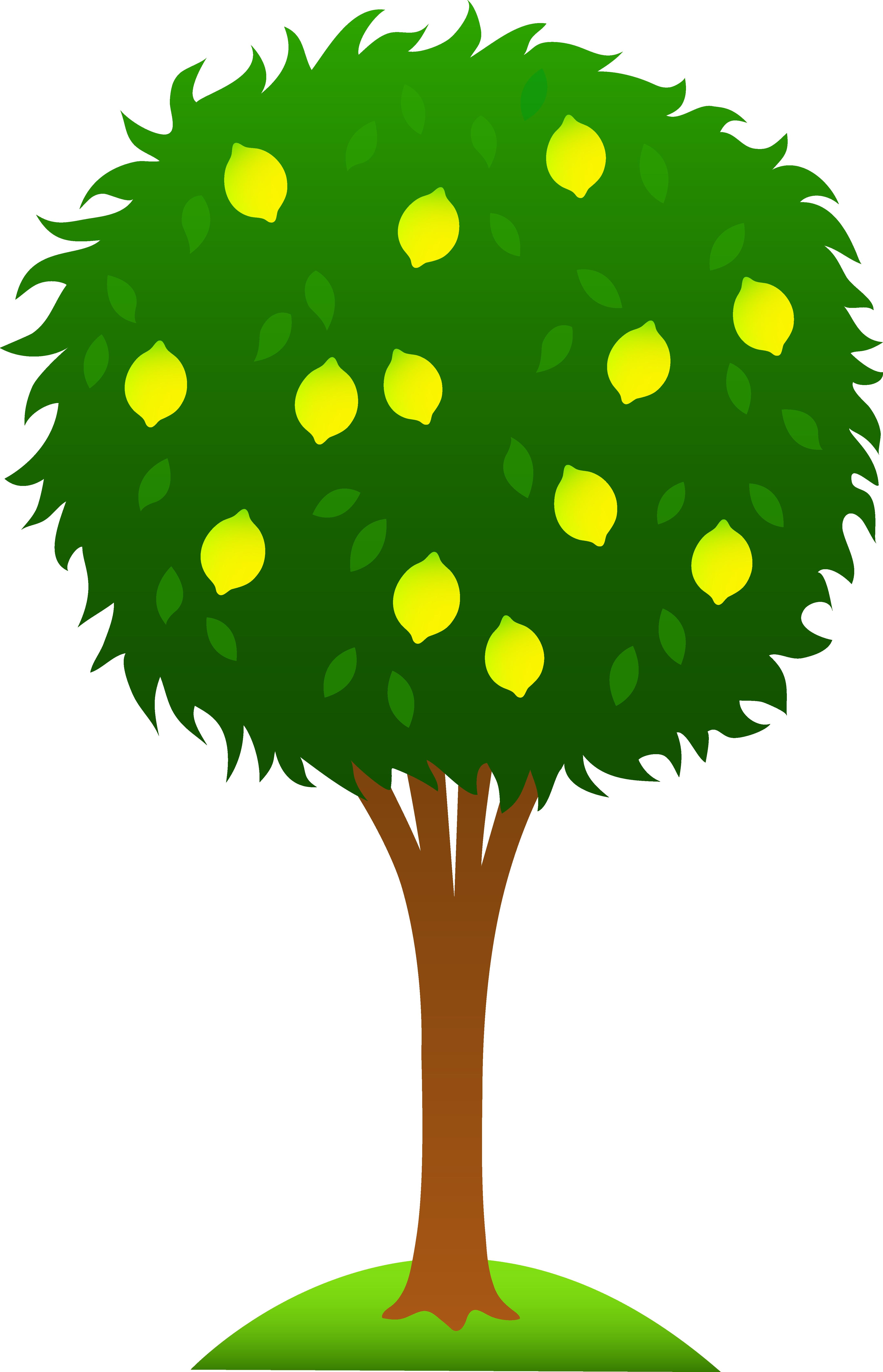 4325x6720 Clip Art Of Lemon Tree