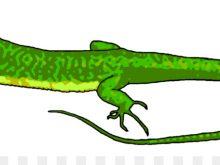 220x165 Lizard Clip Art Cartoon Lizard Clip Art Cartoon Leopard Gecko