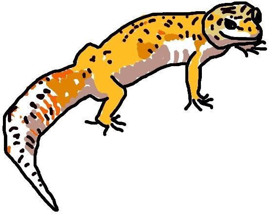 555x444 Leopard Gecko Drawing Lgb Geckos