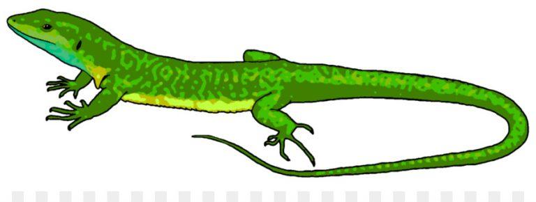 768x290 Lizard Clip Art Lizard Chameleons Reptile Common Iguanas Clip Art