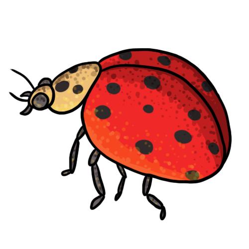 500x500 Free Ladybug Clip Art 15