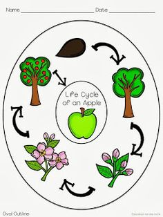 236x314 Collection Of Apple Life Cycle Clipart High Quality, Free