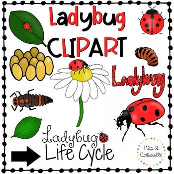 350x350 Ladybug Life Cycle Clip Art {Personal And Commercial Use}