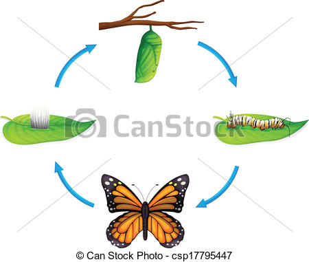 450x381 Life Cycle