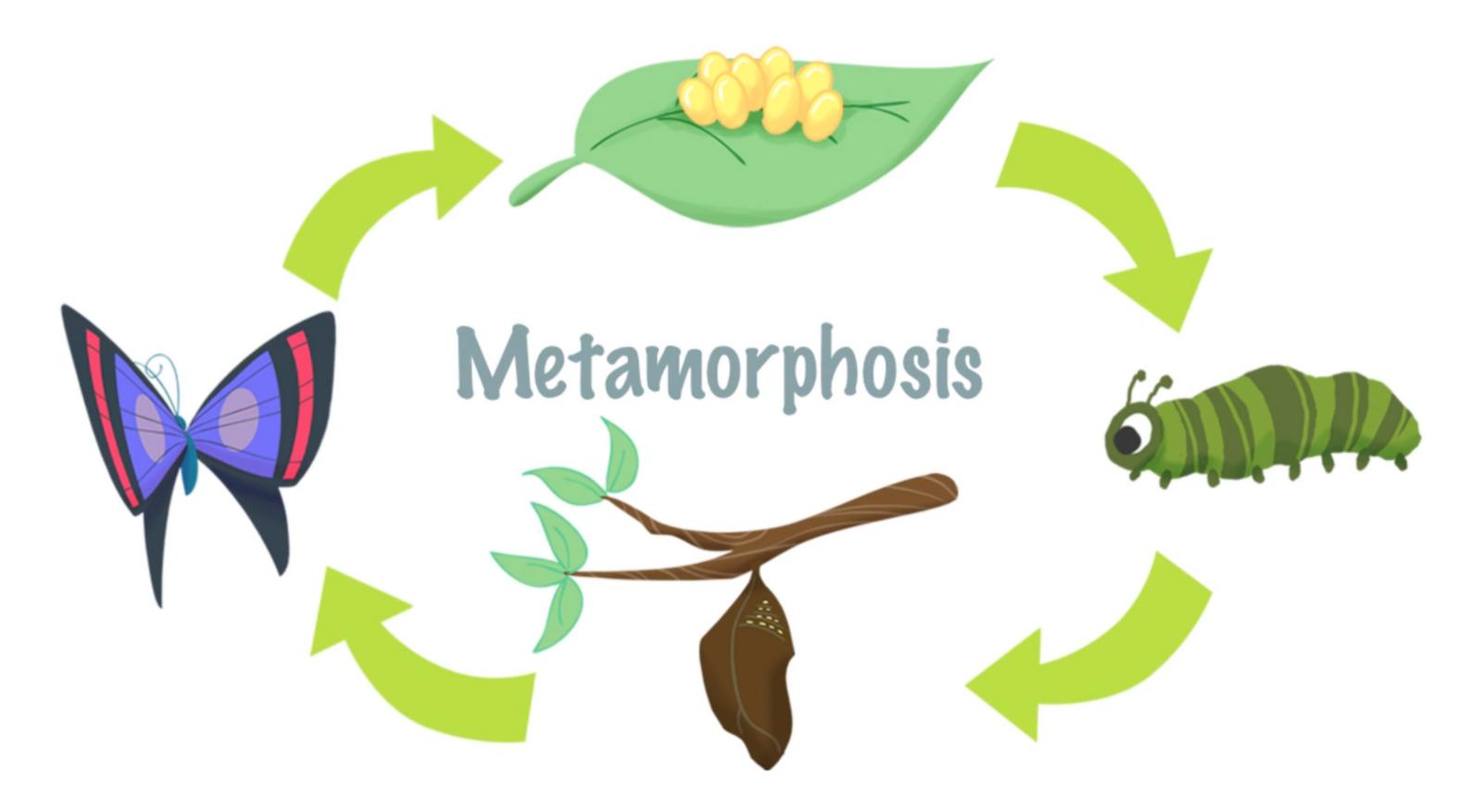 1600x877 Mini Lesson Plan Metamorphosis Littlelives