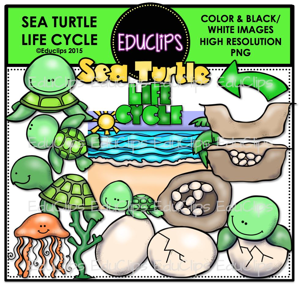 977x933 Sea Turtle Life Cycle Clip Art Bundle (Color And Bampw)
