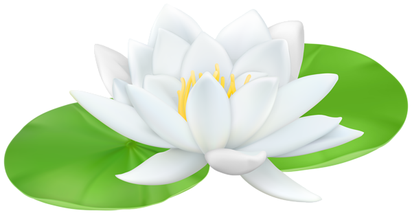 600x310 Water Lily Transparent Png Clip Art Imageu200b Gallery Yopriceville