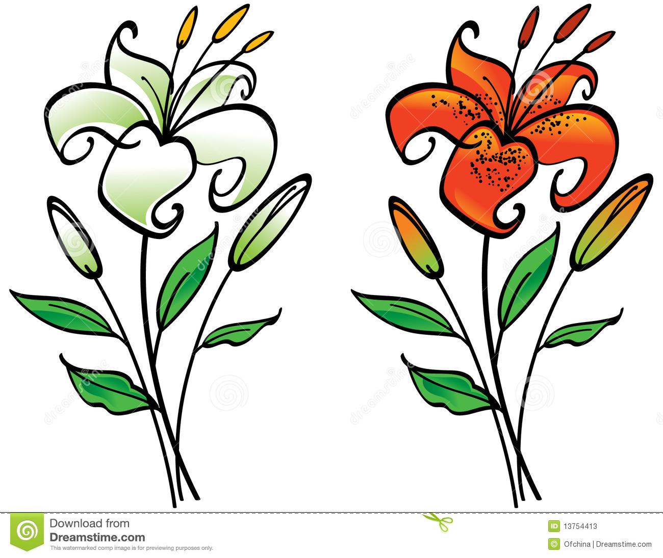 1300x1095 White Lily Clip Art