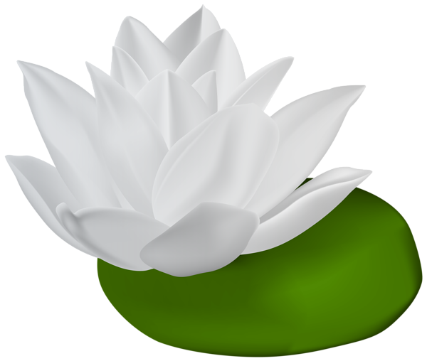 600x508 White Water Lily Transparent Png Clip Art Imageu200b Gallery